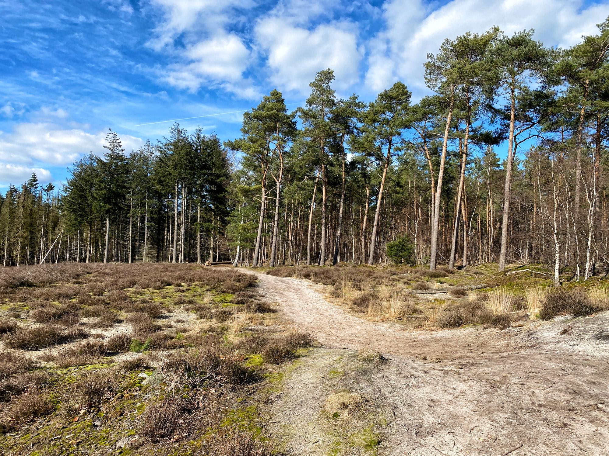 Wandelen in Noord-Brabant: Langs de vennen van de Stiphoutse Bossen