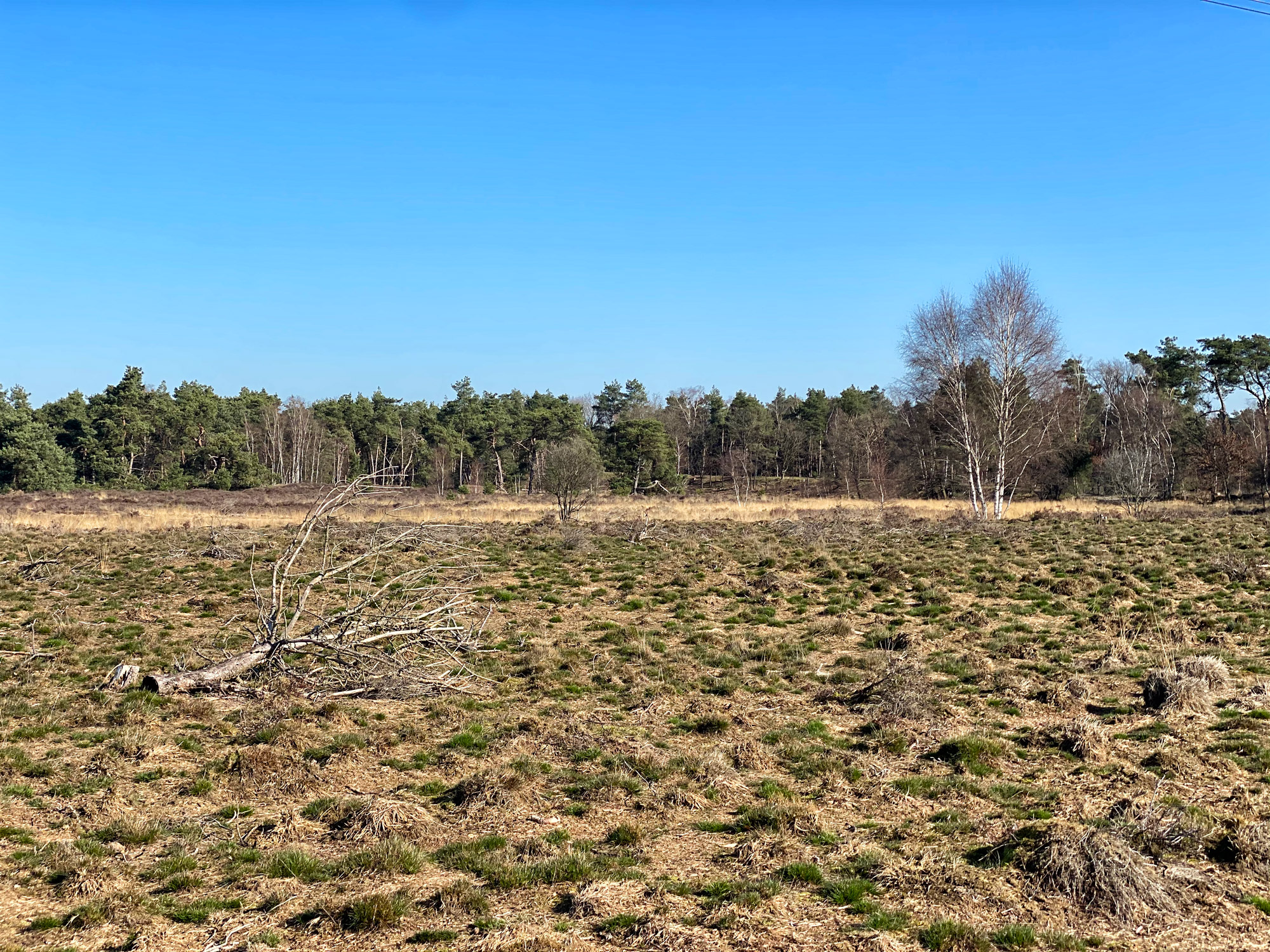 Wandelen in Noord-Brabant: Stratumse Heide & Groote Heide